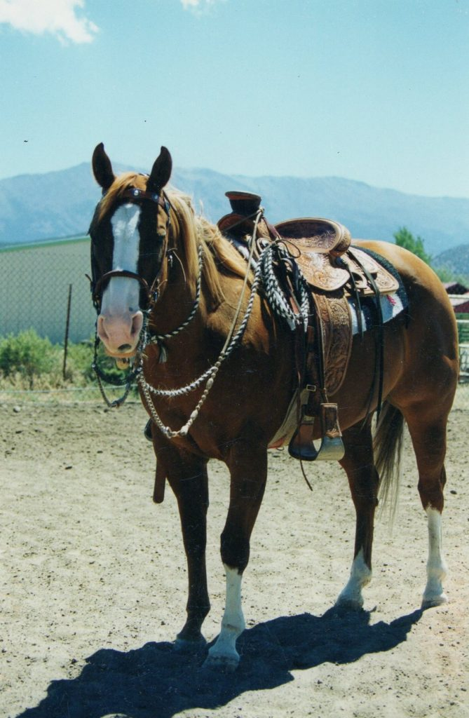 Horse with Headstall Gear